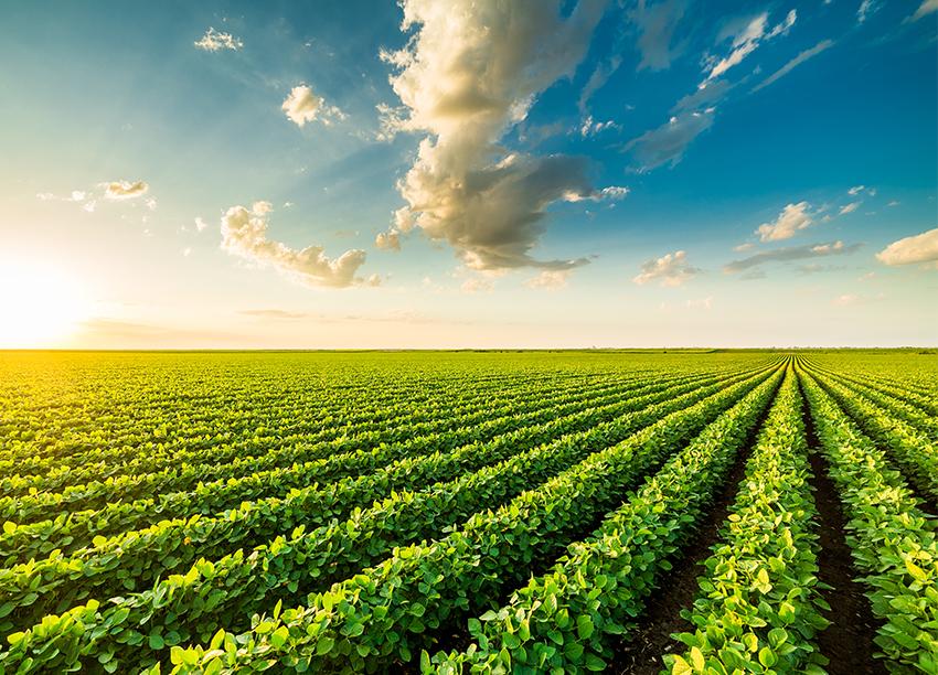 farm-field-small